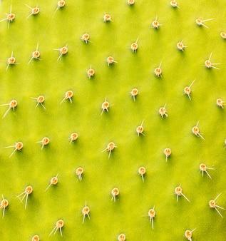 선인장 식물의 클로즈업