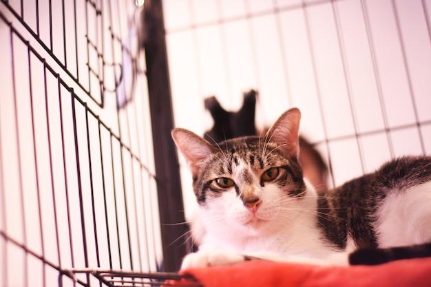 고양이의 감 금 소에 누워의 클로즈업