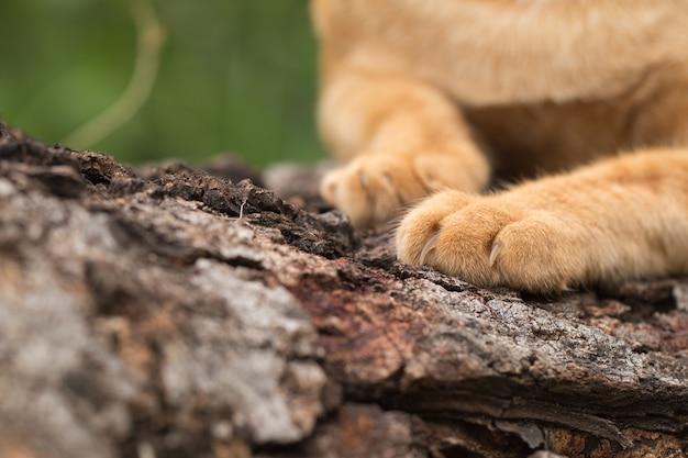 猫の足のクローズアップ