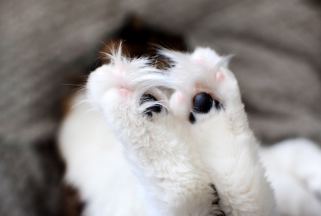 飼い猫の黒いパッドと長い髪の猫の足のクローズアップ