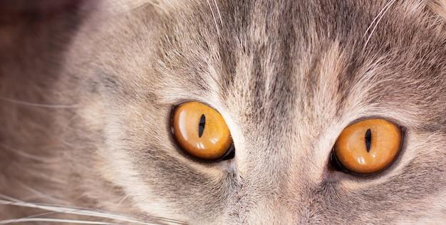 猫の顔のバナーのクローズアップ