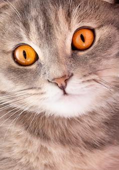 猫の顔のクローズアップ