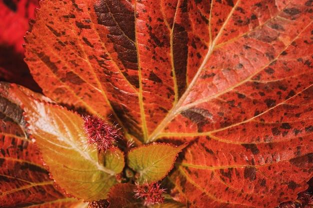 着色された植物の葉のクローズアップ