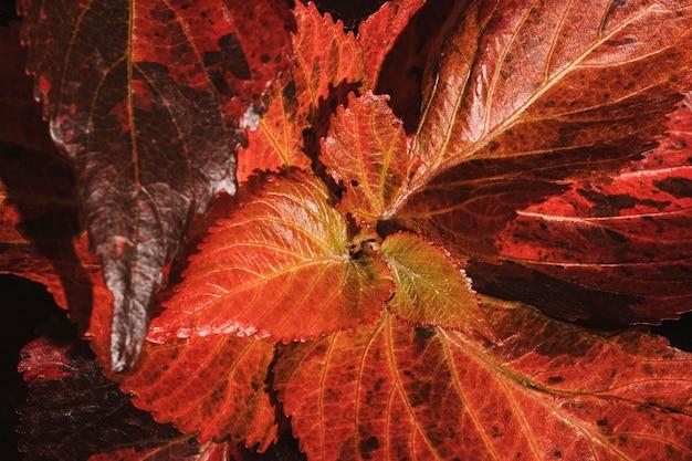 색된 식물 잎의 클로즈업