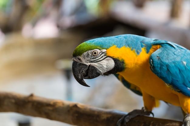 화려한 앵무새 머리 자연 배경의 클로즈업