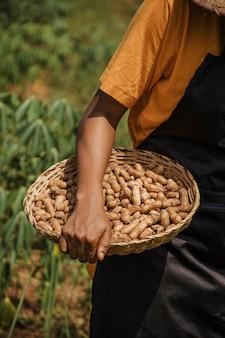 Заделывают сельского работника, держащего арахис
