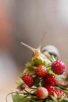 Крупным планом милая улитка с рогами и полосатым панцирем сидит на красной спелой ягоде земляники