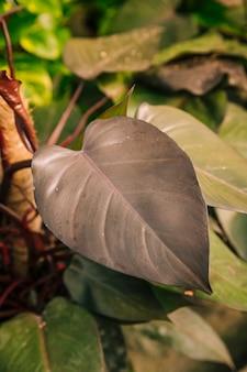 暗い茶色の葉のクローズアップ