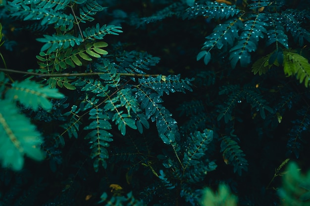 Заделывают темно-зеленые листья фона