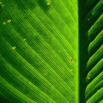 Заделывают темно-зеленые листья на черном фоне