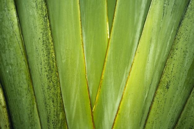 Крупный план темно-зеленых листьев на черном фоне