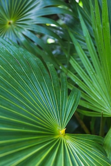 Close-up of dark green tropical palm leaf