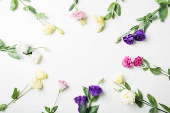 Close-up of different types of flowers on white background