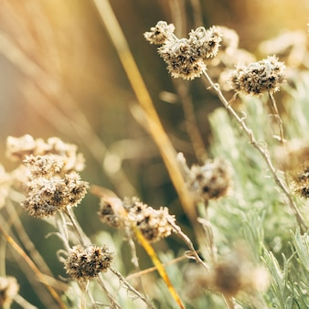 말린 된 꽃의 근접 촬영