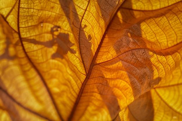 Крупным планом сушеный лист