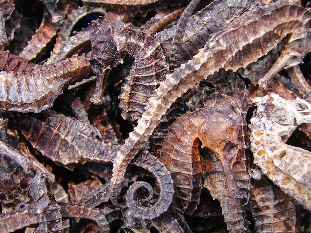乾燥したタツノオトシゴのクローズアップ。中国のエキゾチックな食べ物。の