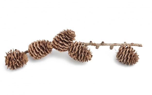 分離された枝を持つドライコーンのクローズアップ