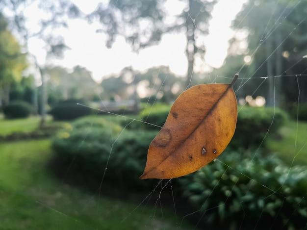 クモの巣の乾燥葉のクローズアップ