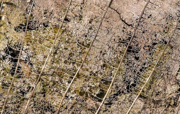 자연 배경을 위한 마른 잎맥 구조의 클로즈업