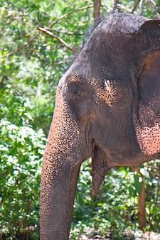 녹색 배경에 코끼리의 클로즈업