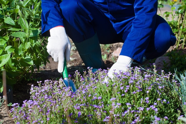 フロックスsubulateを植える農家の手のクローズアップ