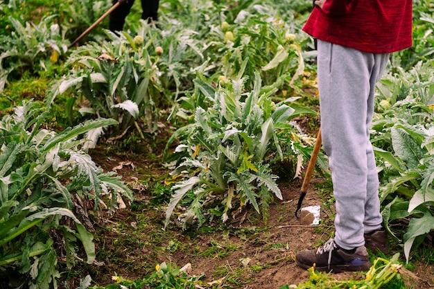 유기 농장 분야에서 일하는 농부의 클로즈업