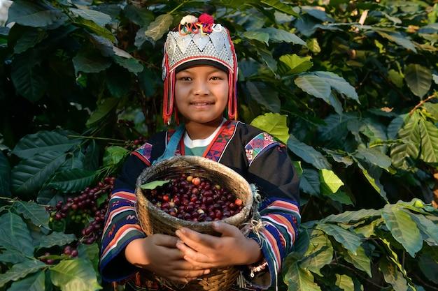 Крупный план фермеров, собирающих кофейные зерна арабики на кофейных плантациях в провинции чианграй, северный таиланд.