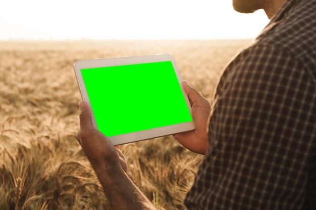 Закройте руки фермеров, держа планшет с зеленым экраном в пшеничном поле
