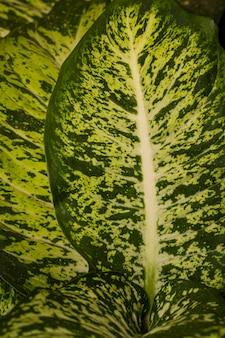 매혹적인 식물 잎의 클로즈업