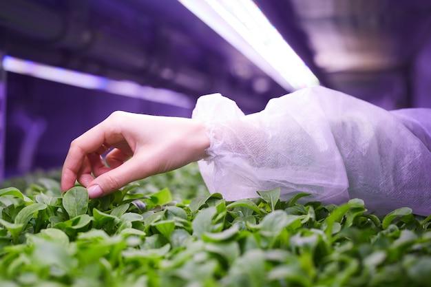 苗床温室、農業工学の概念、コピースペースで若い緑の植物に優しく触れる女性の手のクローズアップ