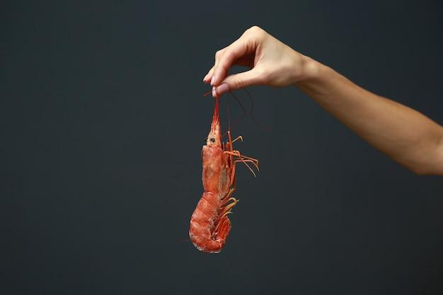 검은색 바탕에 신선한 생 붉은 랑구스틴, 랍스터, 새우 또는 스캠피를 들고 있는 여성의 손을 클로즈업하세요. 건강한 식단을 위한 해산물. 복사 공간입니다.