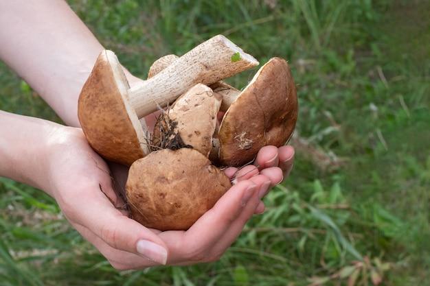 女性の手のクローズアップは、森で集められたキノコを持っています。健康食品のコンセプト。