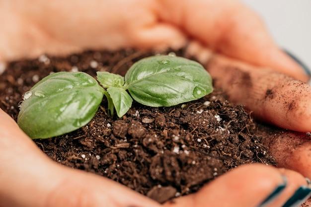 土と小さな植物を保持している女性の手のクローズアップ