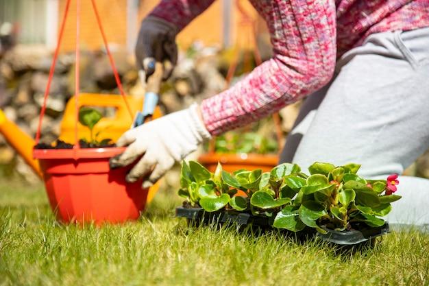 緑の牧草地の屋外ポットに花を植える家庭用手袋の女性の手のクローズアップ。顔なし