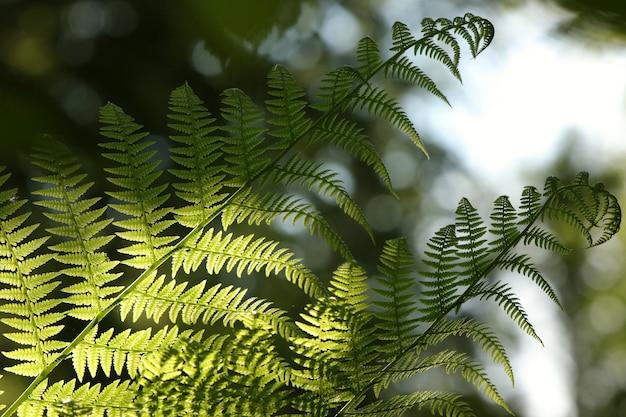 Крупный план папоротника в лесу