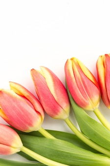 Close up of five blooming tulips on a white background
