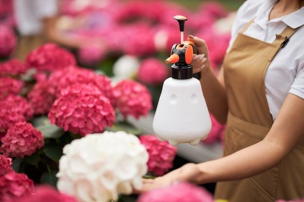 アジサイに水をまくためのスプレーを使用した花屋のクローズ アップ
