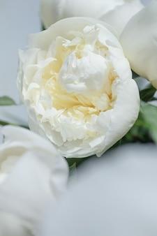Крупный план цветов пионов. белые пионы крупным планом.