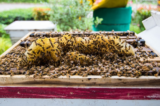 飛んでいる蜂と木製の蜂の巣のクローズアップ