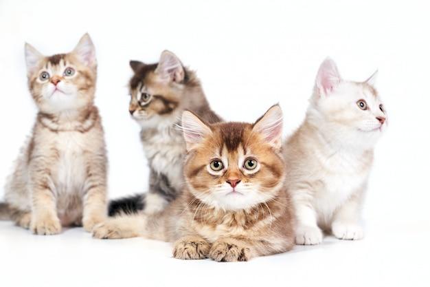 Крупным планом четырех котят.