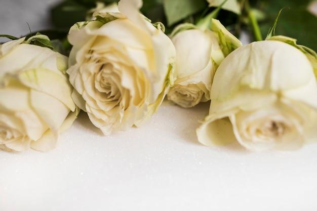 흰색 배경에 신선한 아름다운 장미 확대해서