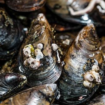 Крупный план свежих черных моллюсков в магазине