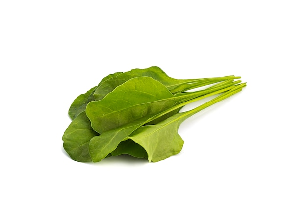 신선한 녹색 시금치 흰색 배경에 고립의 클로즈업