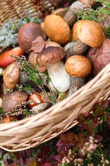 枝編み細工品バスケットで野生のヒースの小枝で飾られた採れたての野生のキノコのクローズアップ