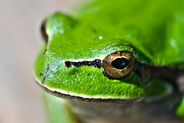 개구리 야외의 클로즈업