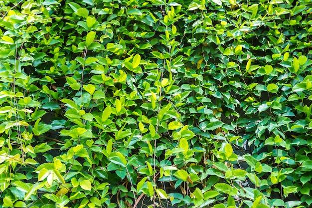 Закройте сад с тропическими зелеными листьями и цветами