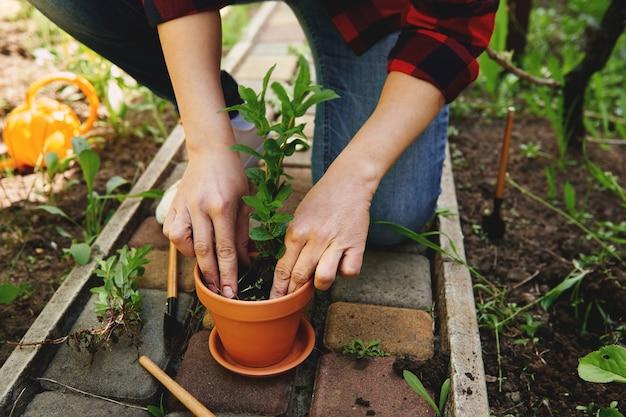 彼女の庭の土鍋にミントを植えている庭師の女性のクローズアップ。庭のメンテナンスと趣味のコンセプト春