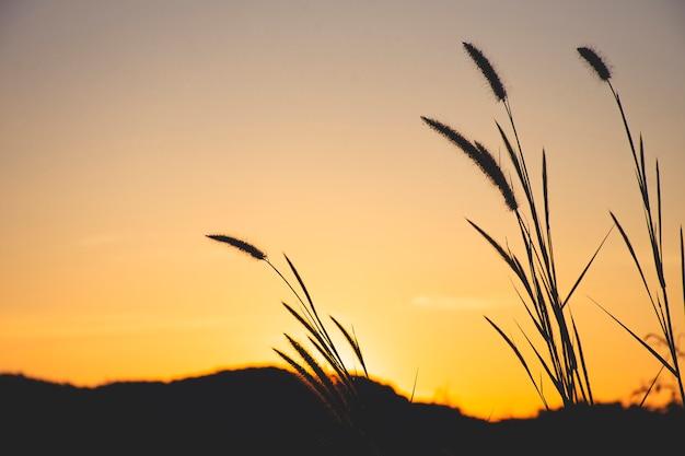 夕焼け空と草のクローズアップ