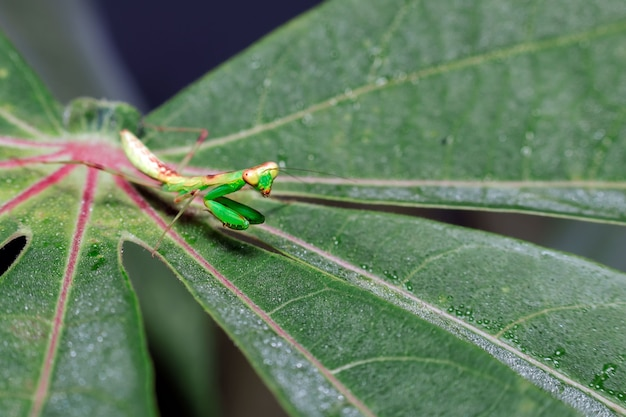 Крупным планом кузнечик на листе в природе