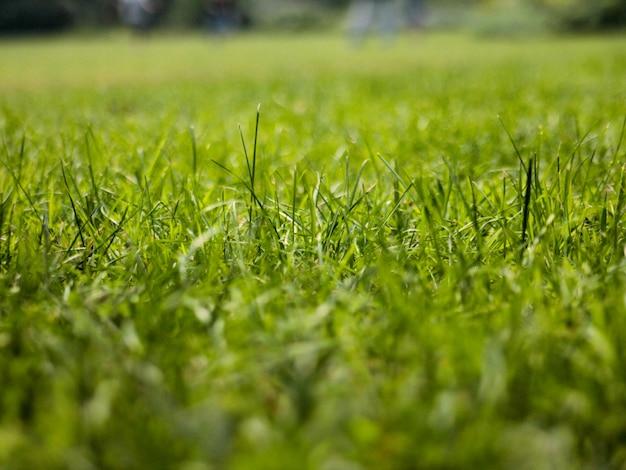 草が茂った牧草地のクローズアップ
